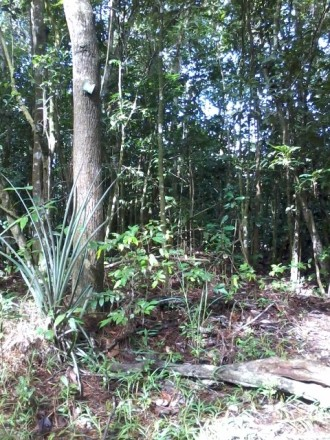 Forêt de Duclos