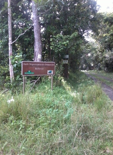 Forêt départementale-domaniale de Bellevue