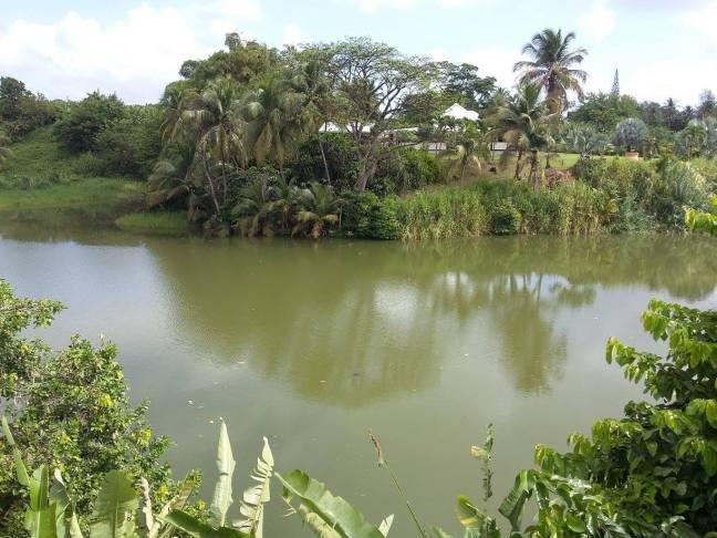 Le barrage de la ravine Besnard