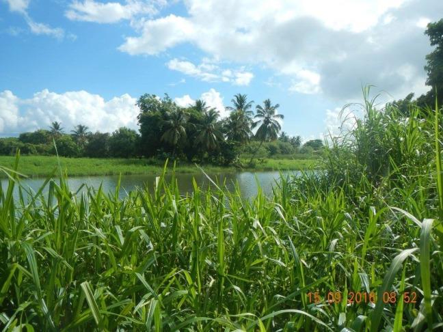 Autre vue de la grande rivière à goyaves