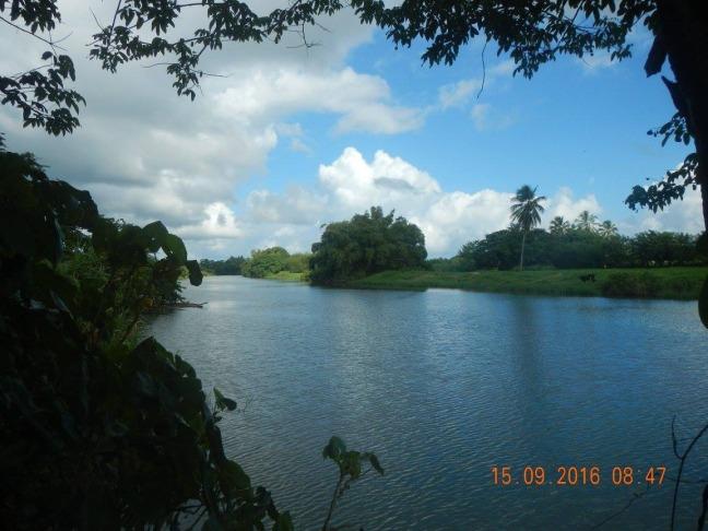 Préambule : Un parcours a travers les champs de canne qui nous permet de côtoyer les bords de la Grande Rivière à Goyaves .